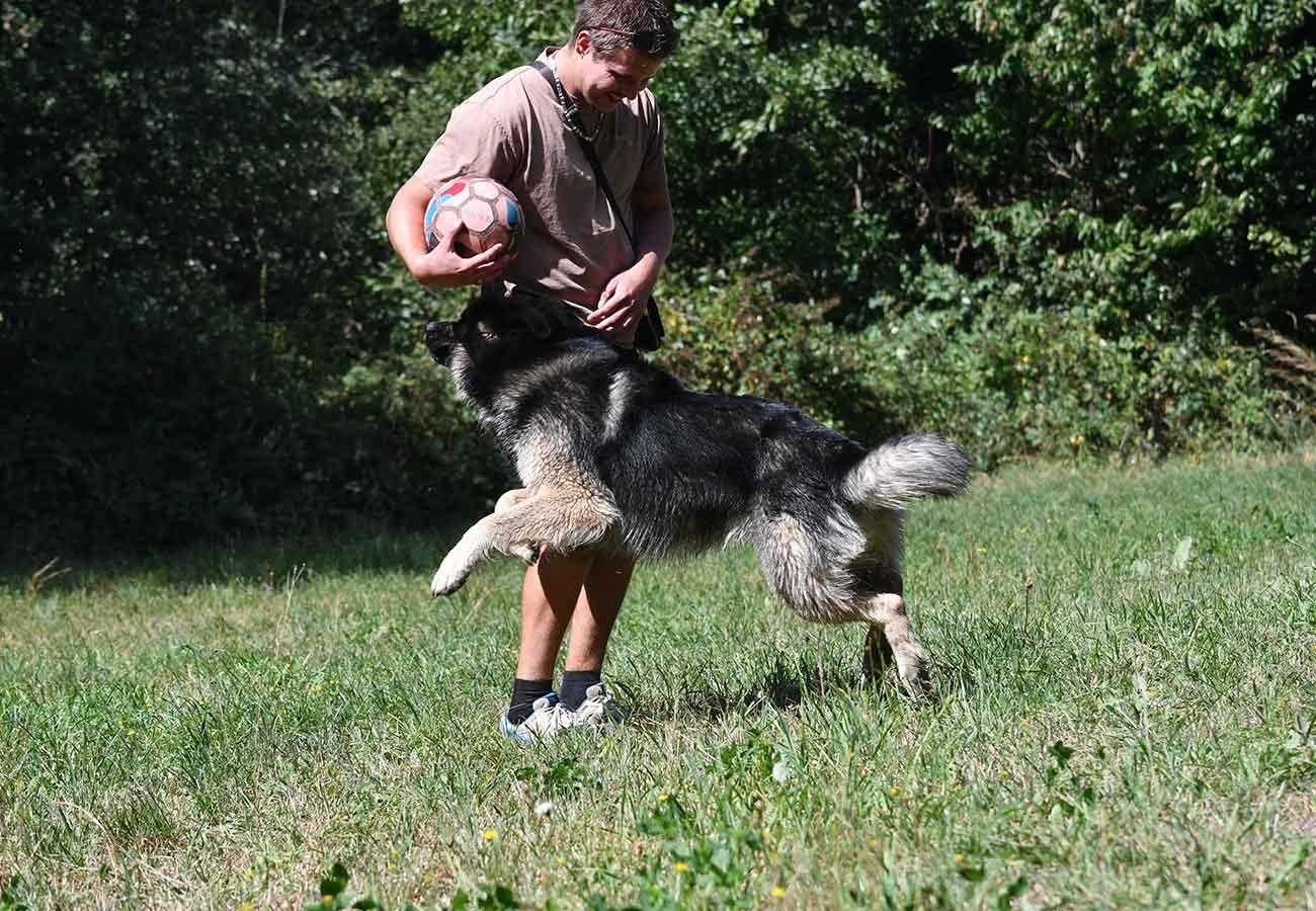 Ewok joue au ballon