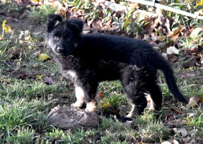 priya_comme_chiens_et_loups_2_mois