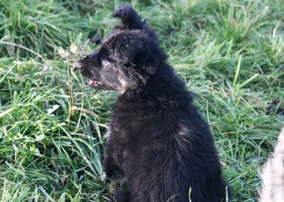 priya_comme_chiens_et_loups_2_mois1