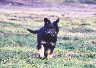 priya_comme_chiens_et_loups_2_mois10
