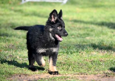 priya_comme_chiens_et_loups_2_mois11