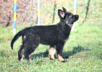 priya_comme_chiens_et_loups_2_mois12