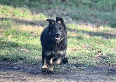 priya_comme_chiens_et_loups_2_mois14