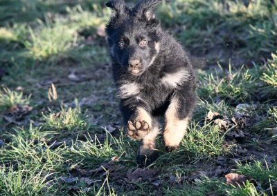 priya_comme_chiens_et_loups_2_mois4