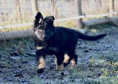 priya_comme_chiens_et_loups_2_mois7