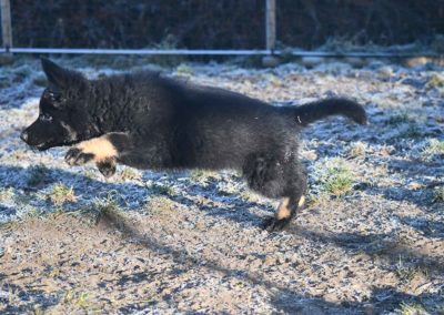 priya_comme_chiens_et_loups_2_mois8