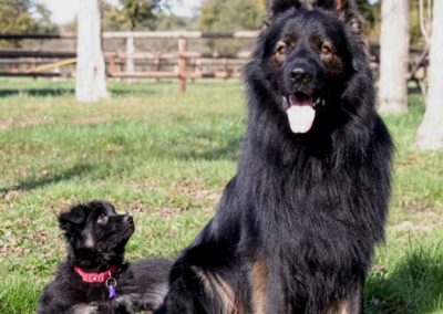 priya_comme_chiens_et_loups_8_semaines